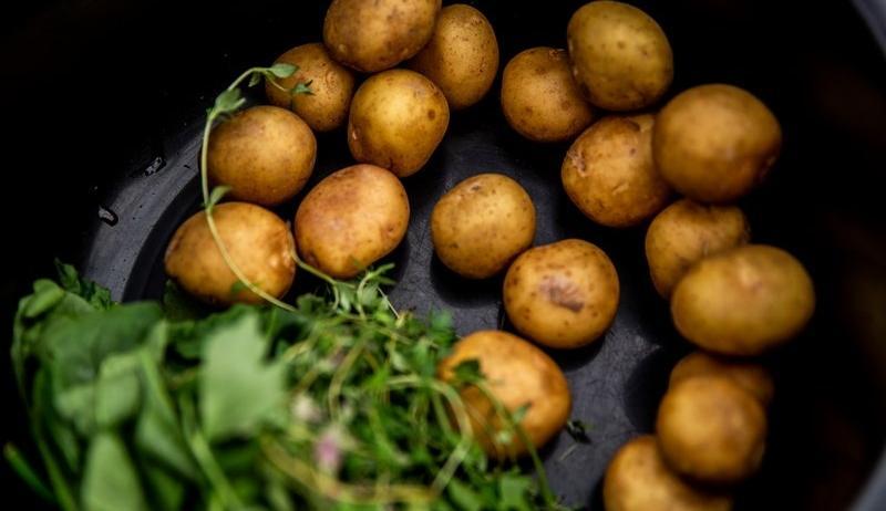 Kartoffelkærlighed